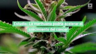 Estudio: La marihuana podría acelerar el crecimiento del cáncer