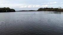 L'affrontement spectaculaire entre un kangourou et un chien dans une rivière