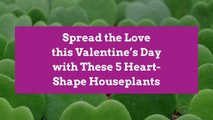 Spread the Love this Valentine's Day with These 5 Heart-Shape Houseplants