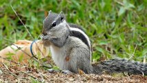 dwhat do squirrels do in winter |How squirrel gets food in winter |facts about squirrels|squirrels