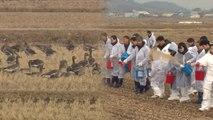 사람의 도움으로 따뜻한 겨울 보내는 철새 / YTN