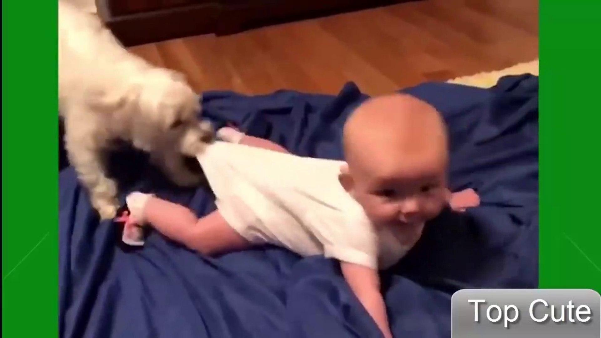 2019 犬や猫と遊ぶかわいい赤ちゃん - おかしい赤ちゃんコンピレーション