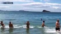 Des touristes se baignent alors qu'une orque affamée se rapproche dangereusement