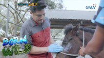 Born to be Wild: Rescuing the animals in Taal Island