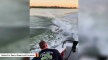 Watch: Dolphins Want To Play With This Rescue Boat Crew