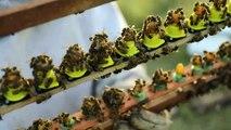 Apicultores en Nicaragua usan abejas reinas para paliar efectos de la sequía