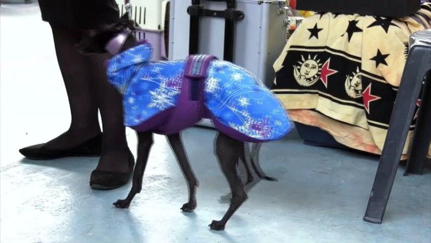 Εκατοντάδες διαφορετικές ράτσες σκύλων απ' όλο τον κόσμο στην Διεθνή Έκθεση Μορφολογίας Σκύλων στη Λαμία
