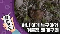 """[15초뉴스] """"왜 벌써 일어났어?""""...겨울잠 깬 개구리 / YTN"""