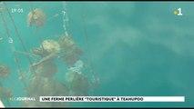 Une ferme perlière à Teahupoo : une première à Tahiti
