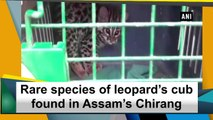 Rare species of leopard's cub found in Assam's Chirang