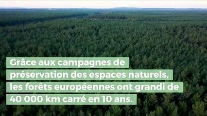 La surface forestière européenne a gagné une superficie égale à celle de la Suisse