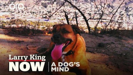 Service dogs, canine personalities, and non-verbal cues -- The Dog's Mind Panel answers your social media questions