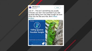 National Weather Service Warns About Falling Iguanas In Florida