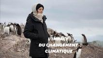 Marion Cotillard en Antarctique avec Greenpeace