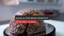 Sugar Alters Brain Chemistry After Only 12 Days