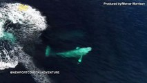 Whale Watching! Check Out This Breathtaking Drone Footage of Migrating Gray Whales!