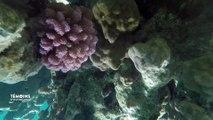 Polynésie Française:  Les Coral Gardeners