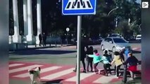A stray dog helps a group of children to cross the street in Batumi, Georgia