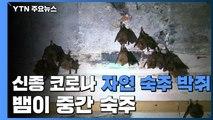 """""""신종 코로나, 박쥐에서 발원...뱀이 중간 숙주"""" / YTN"""