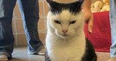 « Le pire chat du monde », l'annonce hilarante d'un refuge pour l'adoption d'un chat