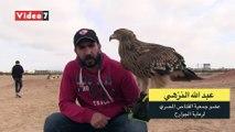 ليس النسر.. شاهد لأول مرة الطائر الحقيقي على علم مصر وطريقة تدريبه