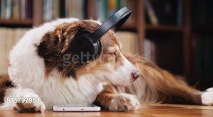 Musik-Playliste für Haustiere