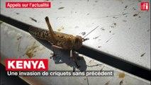 Kenya : une invasion de criquets sans précédent