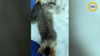 Des chatons prisonniers dans la glace, libérés avec du café