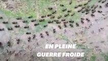 Les fourmis et les termites ont eux aussi des armées aux frontières qui intimident l'adversaire pendant les manoeuvres
