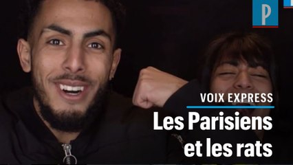Rongeurs à Paris : «Les rats de la capitale, ils ont des plus gros bras que moi»