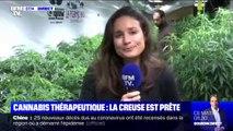 La Creuse sert de région-test à la culture de cannabis thérapeutique