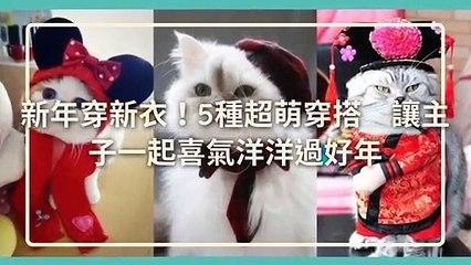 CollectionVideo-petmao_curation-copy4-PetsMaoParser-2020/01/30-09:30
