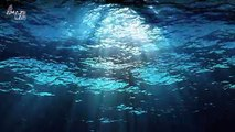 Natural Greenhouse Gases Discovered Seeping from Red Sea Bottom