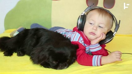 Do Animals Like Music?
