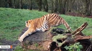 Zoo Wants People To Donate Calvin Klein Perfume For Its Big Cats