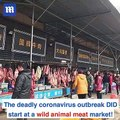 Deadly coronavirus outbreak DID start at the wild animal meat market in Wuhan