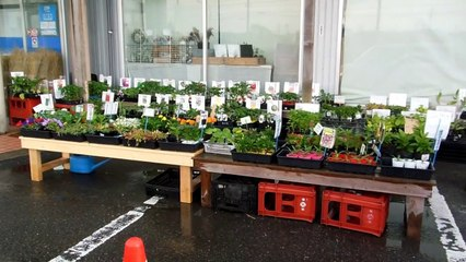 Honesty Test at a Garden Center in Japan