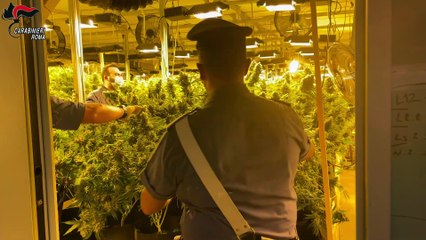 Pomezia, scoperta piantagione di cannabis nascosta in un capannone