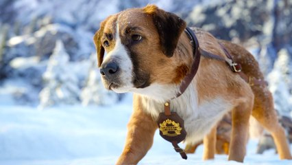 """The Call of the Wild with Harrison Ford - """"New Lead Dog"""" Clip"""