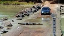 Attention, traversée de crocodiles...  Route risquée