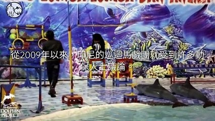 CollectionVideo-petmao_curation-petsmao.nownews-copy1-PetsMaoParser-2020/02/11-09:30