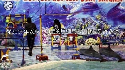 CollectionVideo-petmao_curation-petsmao.nownews petmao_curation_mobile-copy4-PetsMaoParser-2020/02/11-09:30