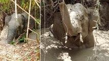 Sauvetage d'un éléphant coincé dans une fosse remplie de boue