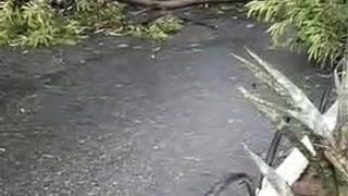 Chuvas acompanhadas de fortes ventos derrubam árvores e assustam moradores, em Patos