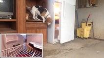 Ce chien très malin réussit son vol de pizza