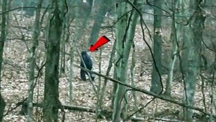Bigfoot lurking in woods Salt Fork State Park Ohio after finding pile of bones,
