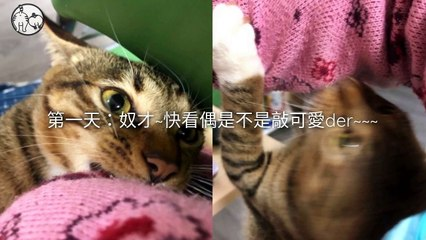CollectionVideo-petmao_curation-petsmao.nownews-copy3-PetsMaoParser-2020/02/12-09:30