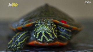 Adorable Endangered Turtles Set to Have Own Gallery at Tennessee Aquarium!