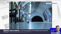 Ce cliché d'un combat de souris dans le métro de Londres remporte le prix du public de la meilleure photo animalière