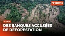 Des banques françaises accusées de financer des projets de déforestation malgré la loi